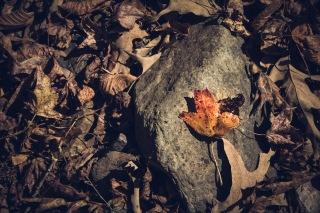 Fall16-2