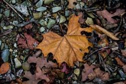 leaves logo 2